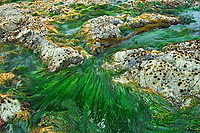 Tidal pool. Vancouver Island., Pacific Rim National Park, British Columbia, Canada