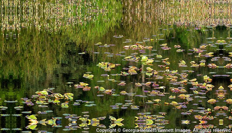 A pond full of lily pads along the Alaska Railroad near Potter, Alaska.