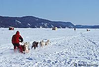 Dog sledding race on a frozen lake