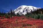 Mt. Rainier seen from Paradise Valley Road over fall foliage.