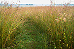 Nachusa Grasslands Natural Area, Illinois:<br /> Path through a summer tallgrass prairie with big bluestem and native grasses, Nachusa Grasslands, Nature Conservancy
