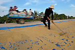Khun Savoeun rakes rice as it dries in the sun along a highway in the village of Dong in northern Cambodia.