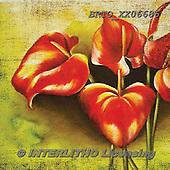 Alfredo, FLOWERS, BLUMEN, FLORES, paintings+++++,BRTOXX06686,#f# ,everyday