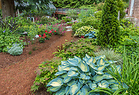 Whidbey Island, Washington: Pathway through quiet woodland garden with hostas, astrantia and geraniums