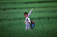 A BOY IS PASSING THROUGH RICE FIELD IN GUANGDON, CHINA<br /> &copy;sinopix