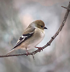Watching birds is a popular activity.
