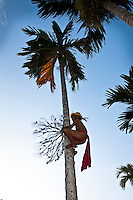 Boy Climbs Betel Palm, Yap Micronesia(Photo by Matt Considine - Images of Asia Collection)
