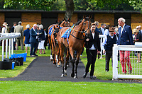 Horses enter the Parade Ring during Horse Racing at Salisbury Racecourse on 15th August 2019