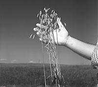 Wheat Farmers SD 1958