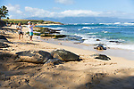 Pacific Green Sea Turtles hauled out to bask at Ho'okipa Beach Park, Paia, Maui, Hawaii, USA