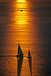 Sailboats silhouetted at sunset on Puget Sound racing with orange glow reflecting on water Seattle Washington State USA