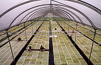 Giant greenhouse produces seedlings for reforestation. Vancouver British Columbia Canada Maple Ridge.
