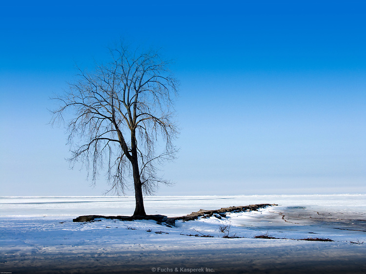 A sentinel tree stands on the frozen shore of Lake Erie.