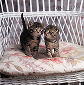 Carl, ANIMALS, photos(SWLA379,#A#) Katzen, gatos
