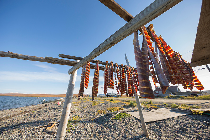 Salmon dry in the air in the coastal village of Teller, Seward Peninsula, Alaska.
