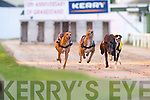 Rebel King (No 1) crosses the finish line in the 10,500 Paddy Byrne Memorial Sweepstake Round 1 Heat 2 in the 5th race at Kingdom Greyhound Stadium, Tralee, on Friday, with Send It Best (No 2) and Low Handicap (No 3) close on his tail..
