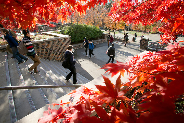 fall views of Bostock Library plaza and steps featuring red Japanese maples
