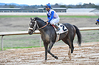 HOT SPRINGS, AR - FEBRUARY 19: Sporting Chance with jockey Luis Saez  the Southwest Stakes at Oaklawn Park on February 19, 2018 in Hot Springs, Arkansas. (Photo by Ted McClenning/Eclipse Sportswire/Getty Images)