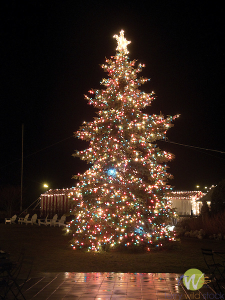 Christmas Tree. Congress Hall, Cape May, NJ.