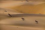 Aerial, Oryx, Namib-Naukluft National Park, Namibia