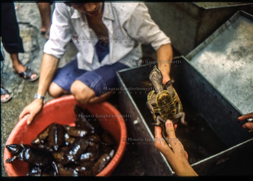 sellers of turtles  venditori di tartarughe