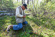 Charles Krebs, professor emeritus, University of British Columbia at Kluane Lake Research Station, Yukon.
