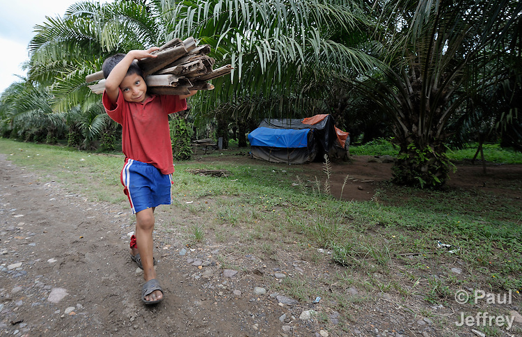 A boy carries palm stalks to use as firewood on the La Lempira Cooperative, near Ceibita, Honduras. La Lempira is an agricultural project which has been seized by armed peasants who claim the land is rightfully theirs under the country's agrarian reform law.