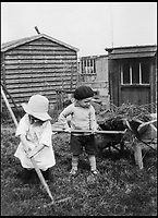 BNPS.co.uk (01202 558833)<br /> Pic: GardenMuseum/BNPS<br /> <br /> Two young children lend a helping hand on an allotment.<br /> <br /> These fascinating old pictures show that allotments have been a passion of the British for centuries.<br /> <br /> Today, more than 90,000 people are on waiting lists to get their own little patch of land to grow vegetables, and the pastime was just as popular in the early years of the 20th century.<br /> <br /> Garden historian and lecturer Twigs Way has sourced dozens of images of green-fingered Brits tending to their allotments during the 'allotment craze' amongst the middle classes sparked by the Allotments Act of 1908 which required councils to supply them when demanded.<br /> <br /> Families would decamp to the allotment on a Sunday and picnic among the cabbages, dividing tasks with the husband digging, the wife collecting crops and the children weeding or caterpillar picking.<br /> <br /> They grew cabbage, carrots, leeks, parsnips, beet, marrow and spinach while also staying faithful to the Victorian favourites seakale, salsify, scorzonera and asparagus.<br /> <br /> The allotments helped keep the British fed during the two world wars but fell out of favour in the 1960s and 1970s with elderly plot holders cast as villains in the battle to free up land for the housing boom.<br /> <br /> But, prompted by a desire amongst Brits to reconnect with the land, they are now in the throes of a full-scale revival.