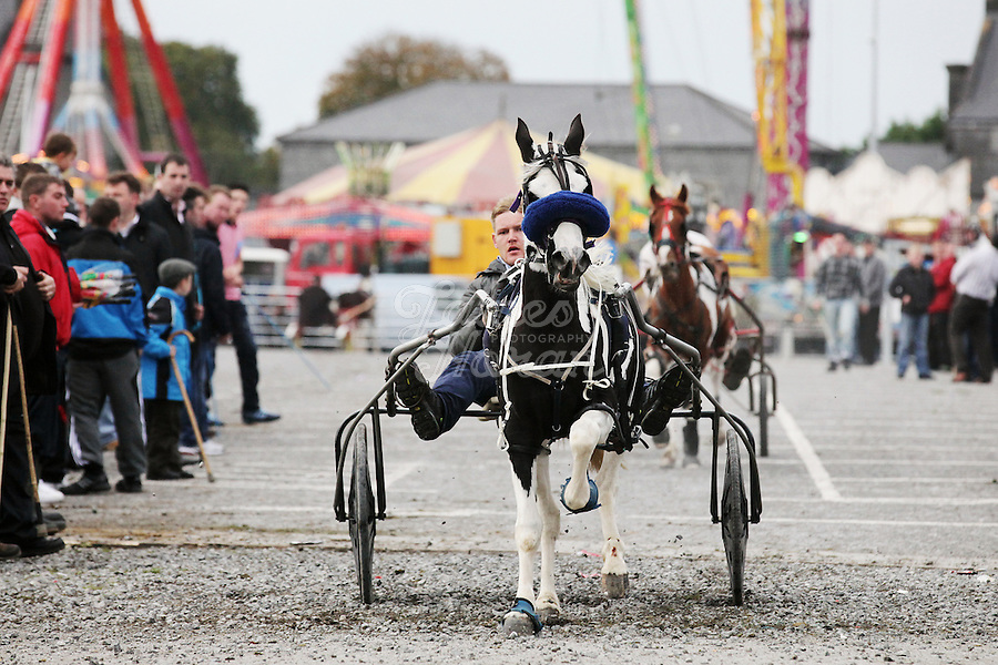 2/10/2010.  Taveler's ride their trotters at the Ballinasloe Horse Fair, Ballinasloe, County Galway, Ireland. Picture James Horan