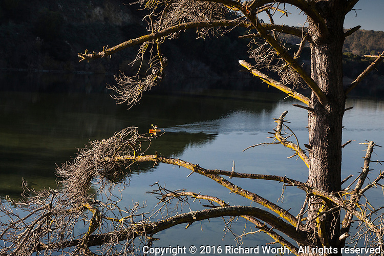 Framed by the bare limbs of a tree on shore, a lone boater paddles still winter waters of Lake Chabot.