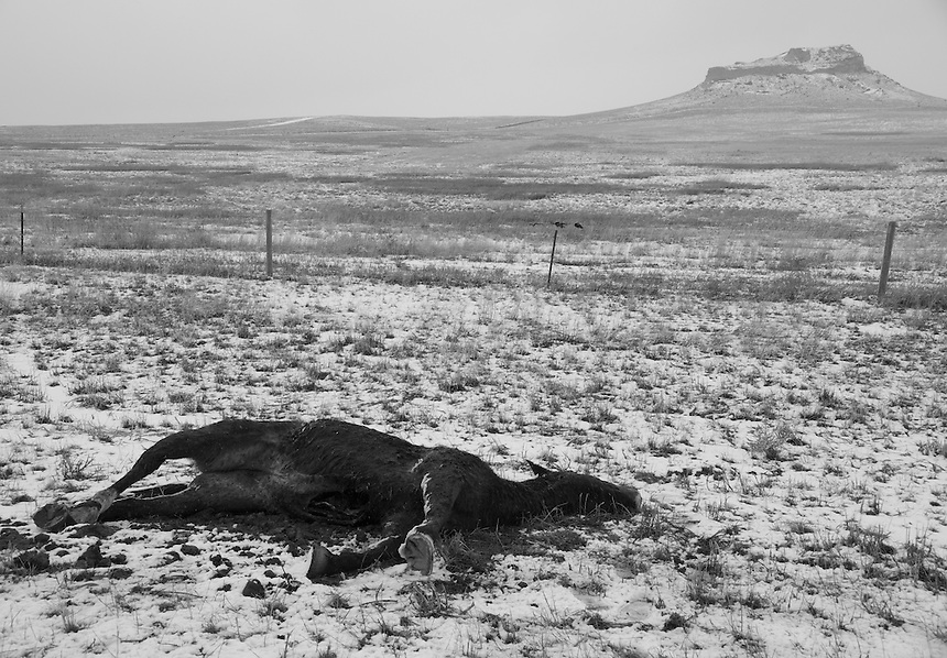 Froze to death horse on the side of the road to Pine Ridge. In the winter the temperature in the Reservation dopes sometime to -25C.