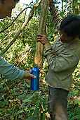 Mato Grosso State, Brazil. Aldeia Kenpo (Kayapo). Kiabiati Kayapo extracting water from a vine.