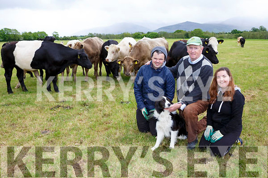 Martin Sheehan and Amy O'Dea helping George Kelly on his farm in Beaufort on Monday
