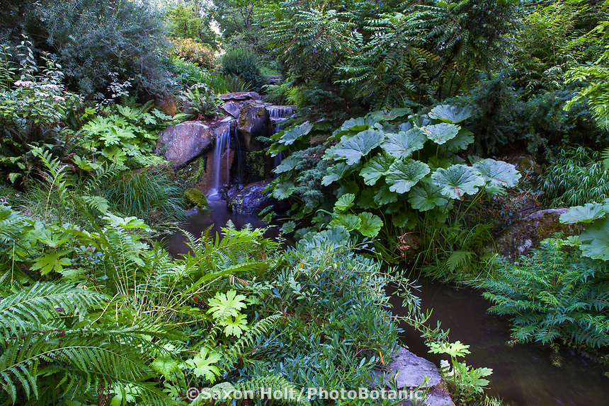 Waterfall and stream through Shorts Ground Cover Garden at Bellevue Botanical Garden