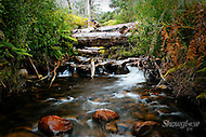 Image Ref: YR155<br /> Location: Cathedral Ranges State Park<br /> Date: 30.01.17