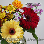 Gisela, FLOWERS, BLUMEN, FLORES, photos+++++,DTGK2128,#f#