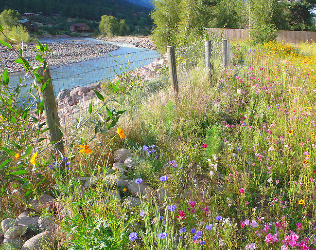 Wildflowers, Animas River, Durango, Colorado