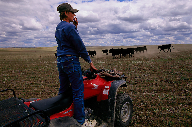 Shannon Fritz moves cattle from her atv on the ranch in South Dakota. She watches for her border collies that help with field work.