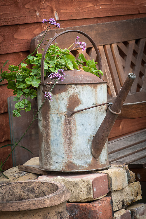 Watering can, geranium and Verbena bonariensis, allotment shed, early August.