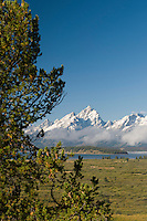 Early morning view through the trees of snow-capped Grand Teton Peak, Grand Teton National Park