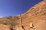 Israel, Negev, rock formations in Wadi Ardon
