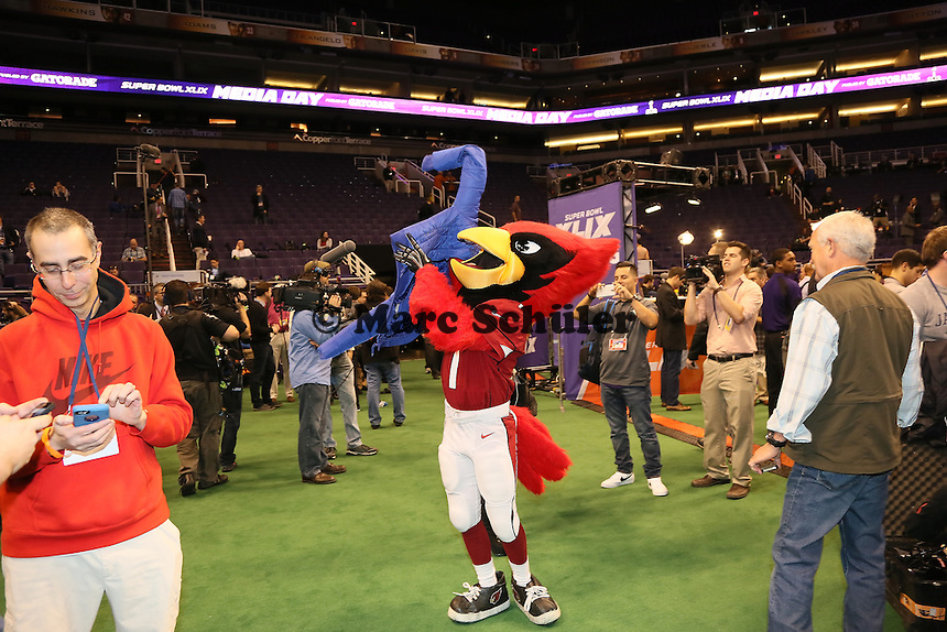 Maskottchen der Arizona Cardinals - Super Bowl XLIX Media Day, US Airways Center, Phoenix