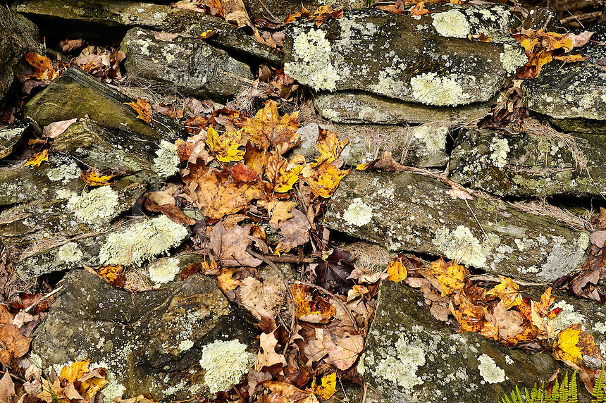 Stone wall detail and autumn leaves, Connecticut