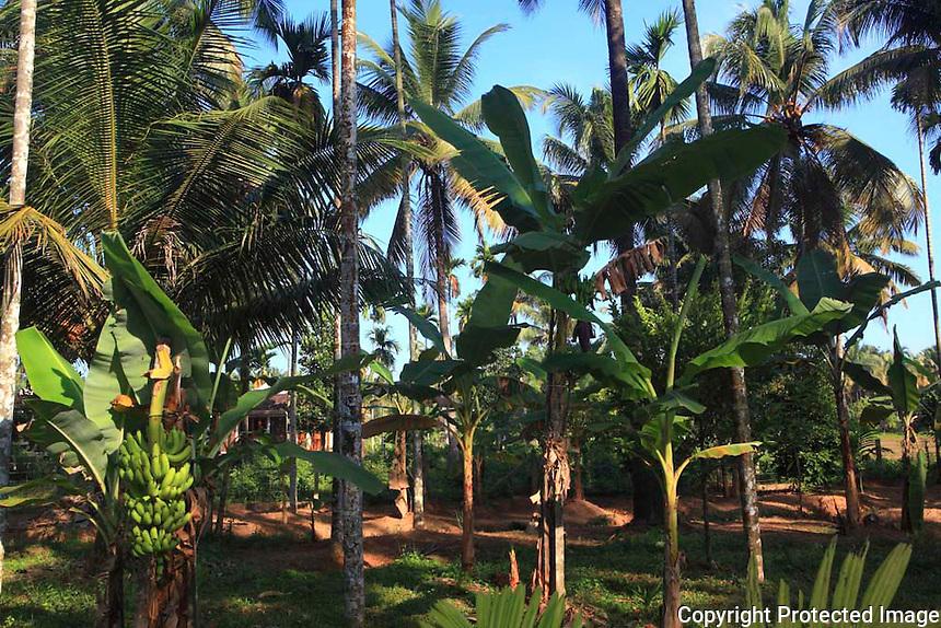 05 Dec 2012, Thrissur,INDIA :.The view of the Aatma Ayurvedic  Centre managed by Ashtavaidyan E.T. Ravi Mooss  and his father Ashtavaidyan  E.T. Divakaran Mooss at village Anandapuram in Thrissur,Kerala...(Subhash Sharma for The L'express) Ayurveda