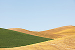 A dry previously-harvested field intersects with new crop growth in a jagged formation in Eastern Washington State.