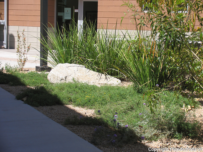 Elle Towne Community Center Facility, Tucson, AZ.--native landscaping. Joy Lyndes, Landscape Architect