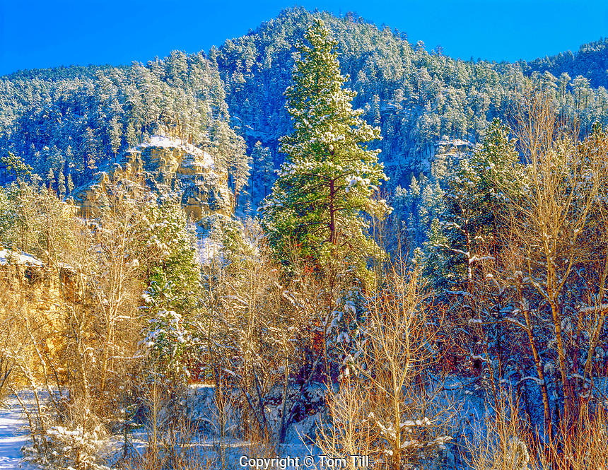 Fresh snow in Spearfish Canyon, Black Hills national Forest, South Dakota, Black Hills