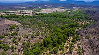 Aerial view of the trees and green areas around the town of Quiriego, Sonora.<br /> Vista Aérea de los arboles y  areas verde en los alrededores de pueblo de Quiriego, Sonora. <br /> (Photo: LuisGiutierrez/NortePhoto)