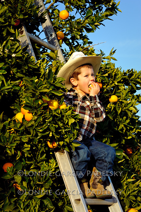 Peyton eating a orange from the orchard, San Luis Obispo, California