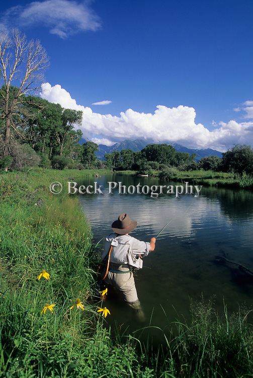 Fly fishing on Depuy's Spring Creek, side slogh, Paradise Valley, Montana.